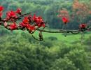 Ba địa điểm chụp hoa gạo đẹp nhất tại Hà Nội