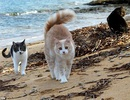Đến thăm hòn đảo mèo còn đông hơn người cả chục lần