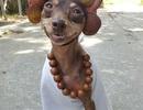"""Chú chó """"mặc quần áo bán hoa quả"""" gây sốt trên mạng xã hội"""