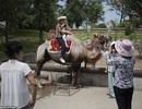 Khám phá bên trong vườn thú ở Triều Tiên