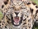 Kỹ năng sống sót khi bất ngờ bị động vật hoang dã tấn công