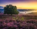 Thiên đường Hà Lan tuyệt đẹp trong sắc tím mộng mơ