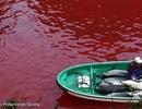Ám ảnh với chuyến săn cá voi đẫm máu ở Nhật Bản