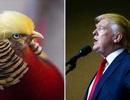 """Chim trĩ hút khách du lịch nhờ """"mái tóc"""" giống hệt Donald Trump"""