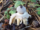 Loại nấm độc kỳ lạ có hình dáng như con người