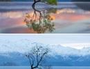 """Những điểm đến nổi tiếng """"hóa tiên cảnh"""" khi mùa đông về"""