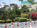 Hoa Xuân xuống phố Sài Gòn