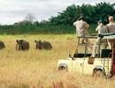 Đến Kenya theo tiếng gọi của thiên nhiên hoang dã