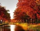 """Rộ trào lưu đi du lịch """"mùa lá đỏ"""""""