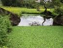 Khám phá chốn yên bình đẹp nên thơ nơi vùng cao Hà Giang