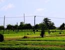 Bất ngờ với  làng quê đẹp như cổ tích trên đất Phú Yên