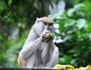 Những hình ảnh về Khỉ