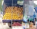 Dân Việt ăn 60 tấn dưa lưới vàng Trung Quốc mỗi ngày