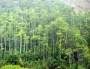 Truy tố 4 bị can lừa đảo dự án trồng rừng tỷ đô
