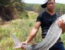 Dựng chuyện bắt cá tầm khủng để 'hét' giá