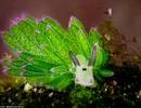 Ngắm sinh vật biển xinh đẹp bậc nhất hành tinh