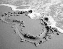 Dã tràng xe cát