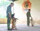 Nghề độc: Dạy ngoại ngữ cho chó thu về trăm triệu mỗi tháng