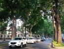 TPHCM: Sắp bứng dưỡng 14 cây xanh trên đường Tôn Đức Thắng