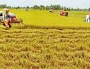 100 đồng vốn FDI chỉ có hơn 1 đồng đổ vào nông nghiệp