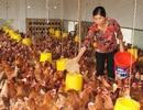 """Chọn """"size"""" cho ngành chăn nuôi Việt"""