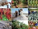"""Bài 2: Tìm giải pháp gỡ """"tắc nghẽn"""" trong chuỗi giá trị nông sản"""