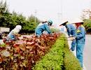 Bổ sung hình phạt lao động phục vụ cộng đồng