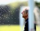 Wenger đầy lo lắng trước trận chung kết FA Cup