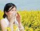 Phòng và trị viêm mũi dị ứng mùa xuân