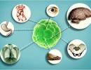 Kỹ thuật tế bào gốc: Những câu hỏi còn lơ lửng
