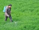 WHO cảnh báo khả năng gây ung thư của thuốc diệt cỏ