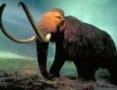 Tranh cãi gay gắt xung quanh việc nhân bản vô tính voi mamút