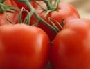 Sự thật bất ngờ về công nghệ sinh học thực phẩm