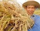 """Vẫn mờ nhạt """"Chân dung người nông dân Việt Nam"""""""