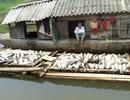 3 cơ sở xả thải gây ô nhiễm sông Bưởi bị phạt gần 4 tỷ đồng