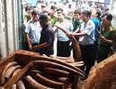 Phó Thủ tướng yêu cầu điều tra làm rõ đường dây buôn lậu ngà voi