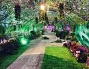 """Cận cảnh """"vườn tình yêu"""" lãng mạn nhất ngày Valentine tại Hà Nội"""