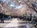 240 suất học bổng đại học và cao học tại Hàn Quốc