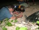 Xem rùa đẻ trứng tại Vườn quốc gia Côn Đảo