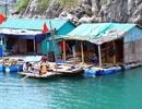 Quảng Ninh: Đưa làng chài Vịnh Hạ Long lên cạn