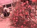 Rộn ràng chợ hoa Quảng Bá vào xuân