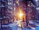 Lung linh giọt nắng mùa đông!