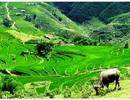 Những điểm du lịch đáng dừng chân trên cao nguyên Hà Giang
