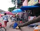 Hà Nội: Vẫn ngổn ngang sau cơn giông lịch sử