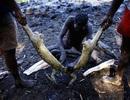 Bộ tộc nguyên thủy sống bằng nghề săn cá sấu hàng chục ngàn năm