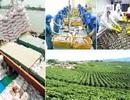 Nhà nước sẽ hỗ trợ tiền tỷ cho doanh nghiệp đầu tư vào nông nghiệp