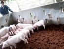 Sẽ nhân rộng mô hình chăn nuôi theo hướng an toàn sinh học