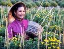 Hoa được mùa, mai được giá, người trồng phấn khởi chờ Tết