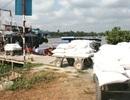 Thu mua tạm trữ: Lúa giảm giá vì kênh, mương cạn kiệt?