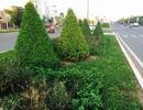 """Vụ """"bán cái"""" gói thầu chăm sóc cây xanh: Đề nghị hủy kết quả trúng thầu"""